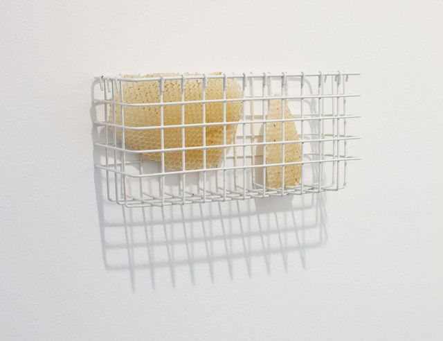 Sema Bekirovic, Honey comb, mixed media, Untitled (Bees), 2011