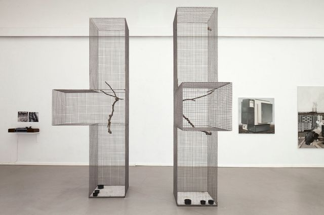 Lucas Lenglet, Steel wire mesh, stainless steel, polyurethane cast, canary, common linnet, Two cages with annex, 2014