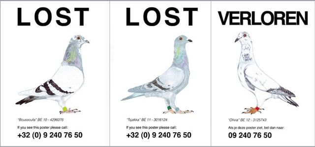 Pilvi Takala, Posters and 5 minutes sound, Lost Pigeons (Detail), 2012
