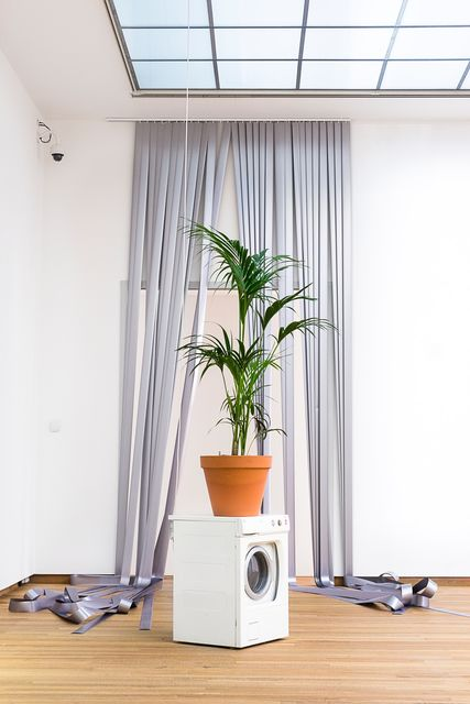 Daniel Van Straalen, Washing machine and palm plant, Oh, 2014